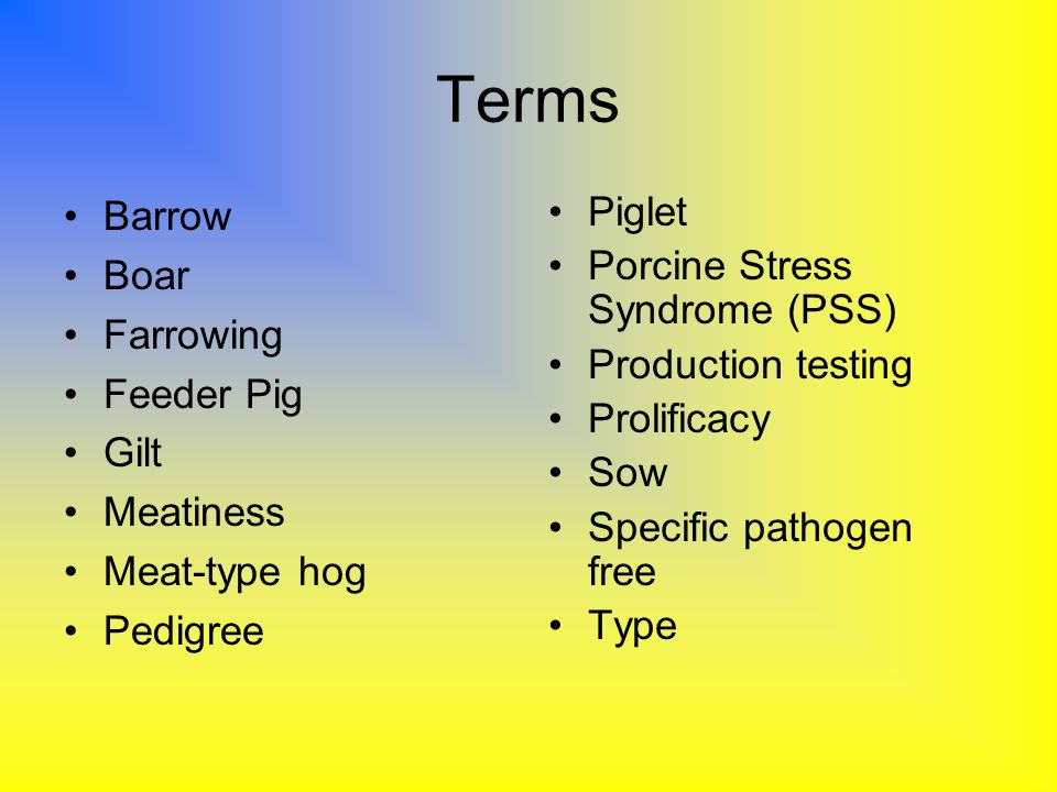 Terms Barrow Boar Farrowing Feeder Pig Gilt Meatiness Meat-type hog