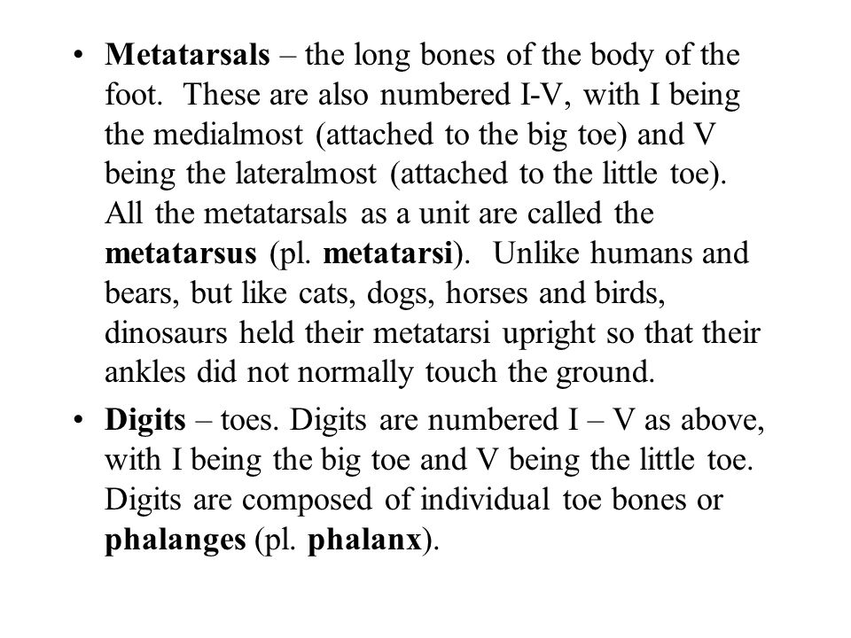 Metatarsals – the long bones of the body of the foot