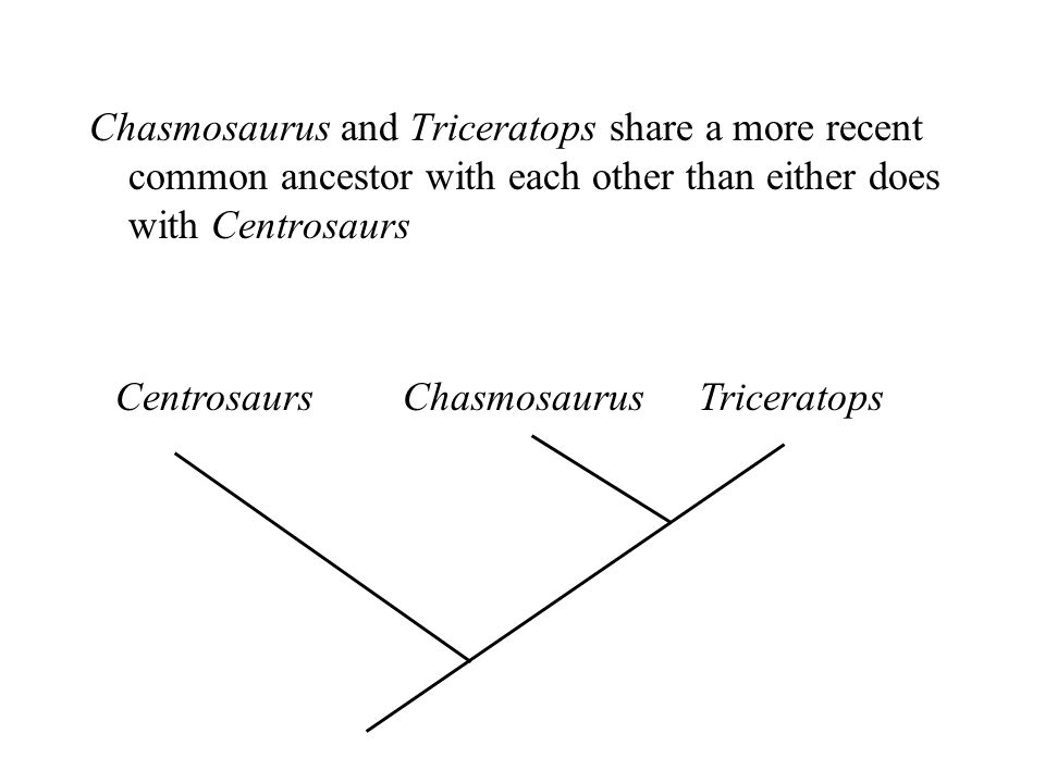 Chasmosaurus and Triceratops share a more recent common ancestor with each other than either does with Centrosaurs