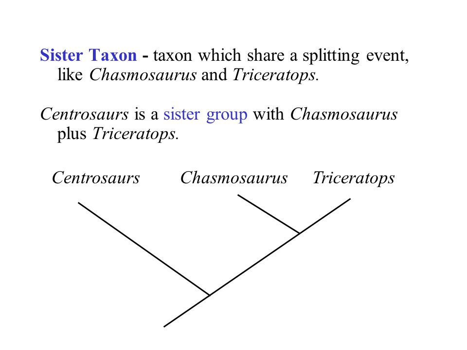 Sister Taxon - taxon which share a splitting event, like Chasmosaurus and Triceratops.