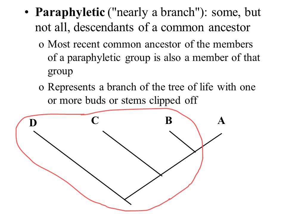 Paraphyletic ( nearly a branch ): some, but not all, descendants of a common ancestor