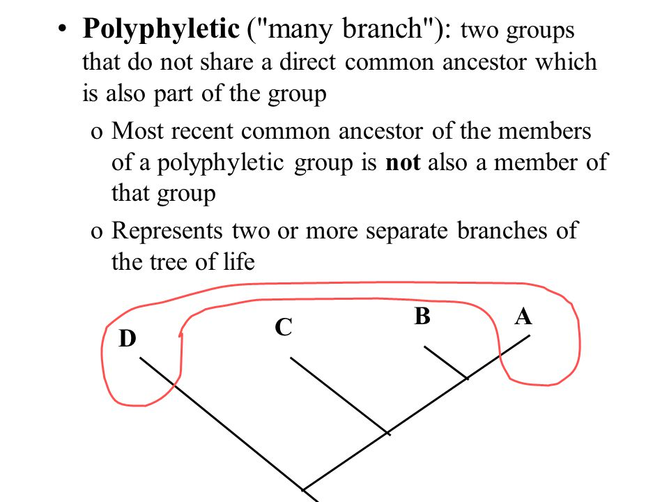 Polyphyletic ( many branch ): two groups that do not share a direct common ancestor which is also part of the group