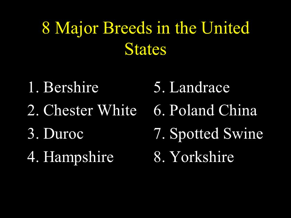 8 Major Breeds in the United States