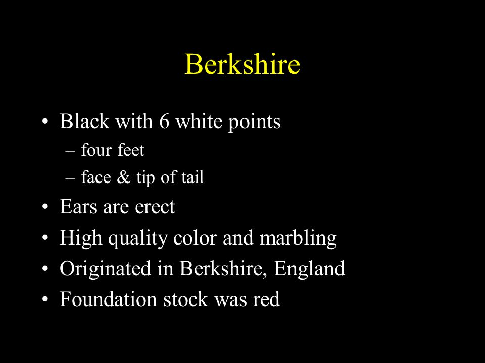 Berkshire Black with 6 white points Ears are erect