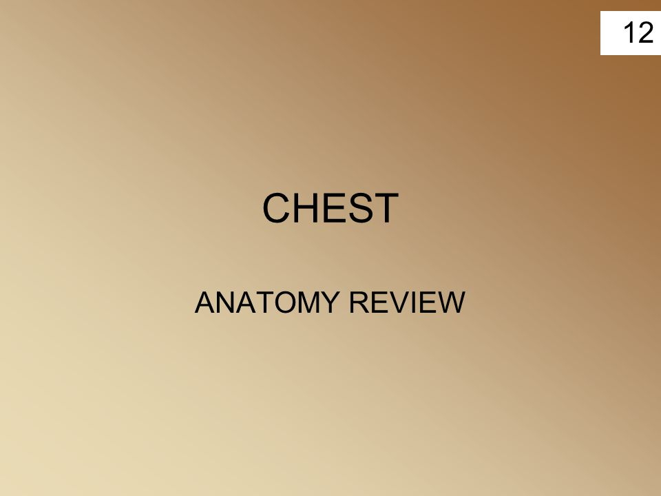 CHEST ANATOMY REVIEW
