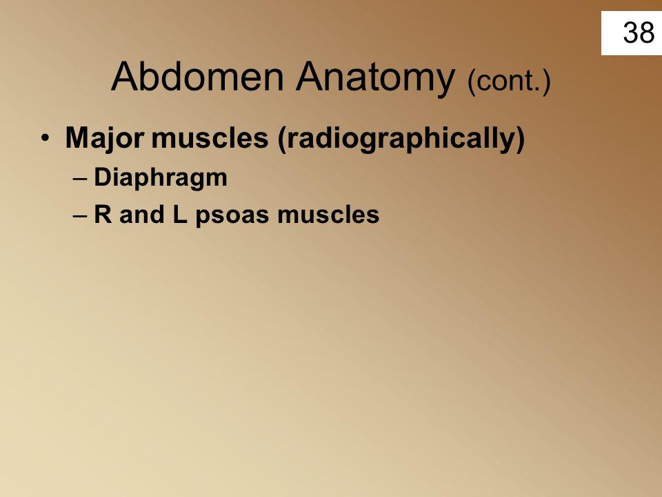 Abdomen Anatomy (cont.)