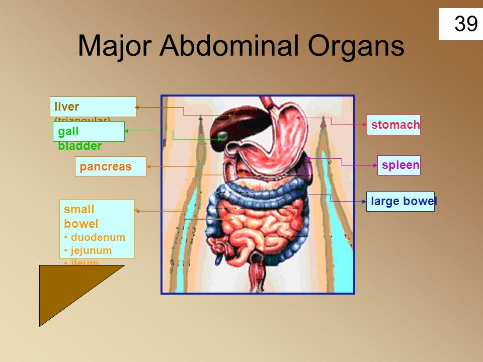 Major Abdominal Organs