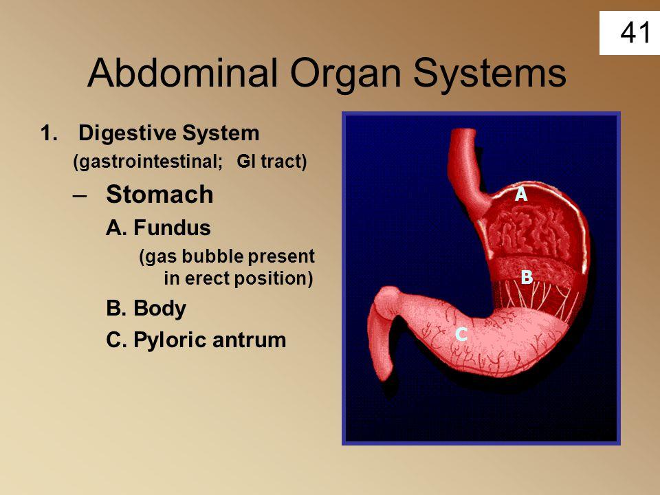 Abdominal Organ Systems