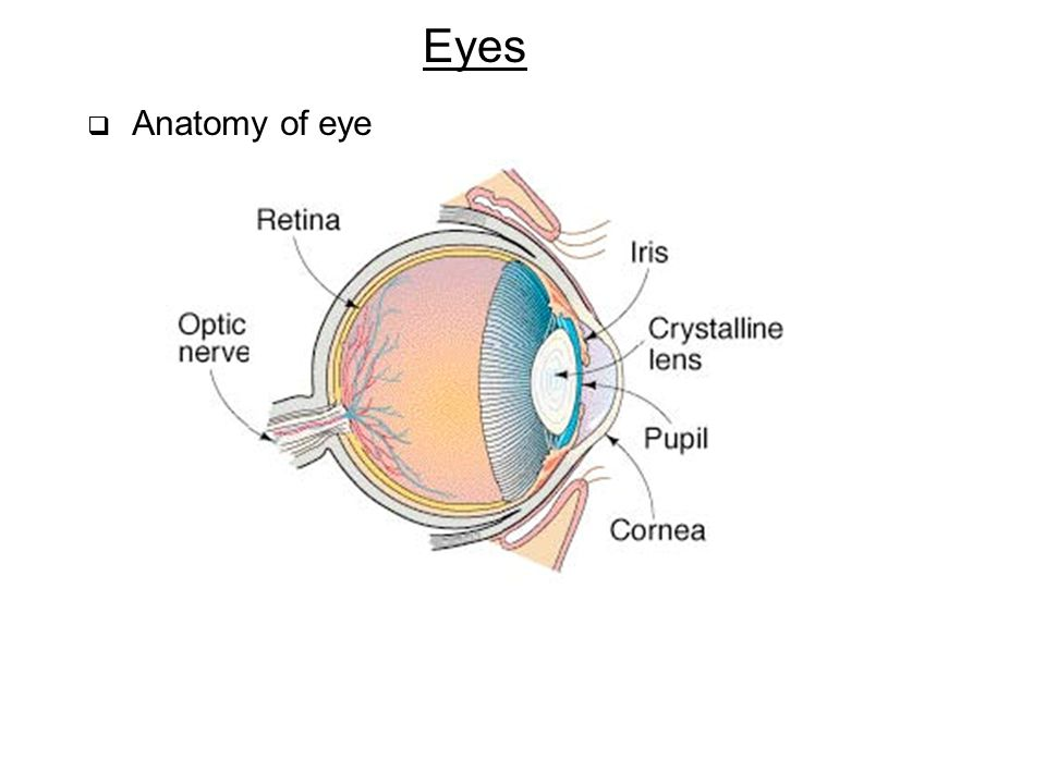 Eyes Anatomy of eye