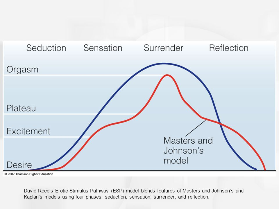 David Reed's Erotic Stimulus Pathway (ESP) model blends features of Masters and Johnson's and Kaplan's models using four phases: seduction, sensation, surrender, and reflection.