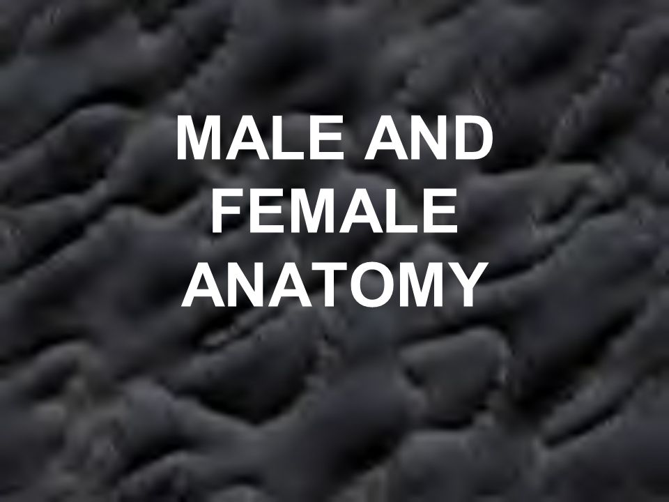 MALE AND FEMALE ANATOMY