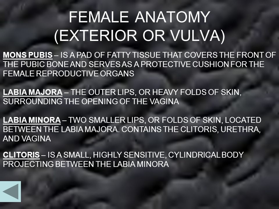 FEMALE ANATOMY (EXTERIOR OR VULVA)
