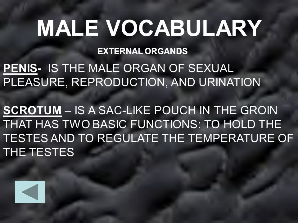 MALE VOCABULARY EXTERNAL ORGANDS. PENIS- IS THE MALE ORGAN OF SEXUAL PLEASURE, REPRODUCTION, AND URINATION.
