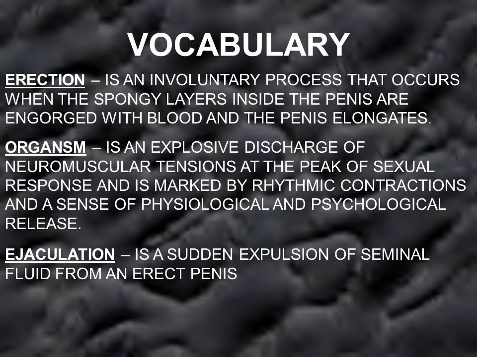 VOCABULARY ERECTION – IS AN INVOLUNTARY PROCESS THAT OCCURS WHEN THE SPONGY LAYERS INSIDE THE PENIS ARE ENGORGED WITH BLOOD AND THE PENIS ELONGATES.
