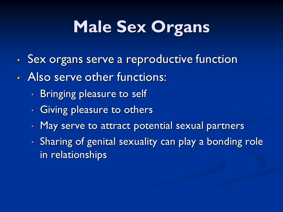 Male Sex Organs Sex organs serve a reproductive function