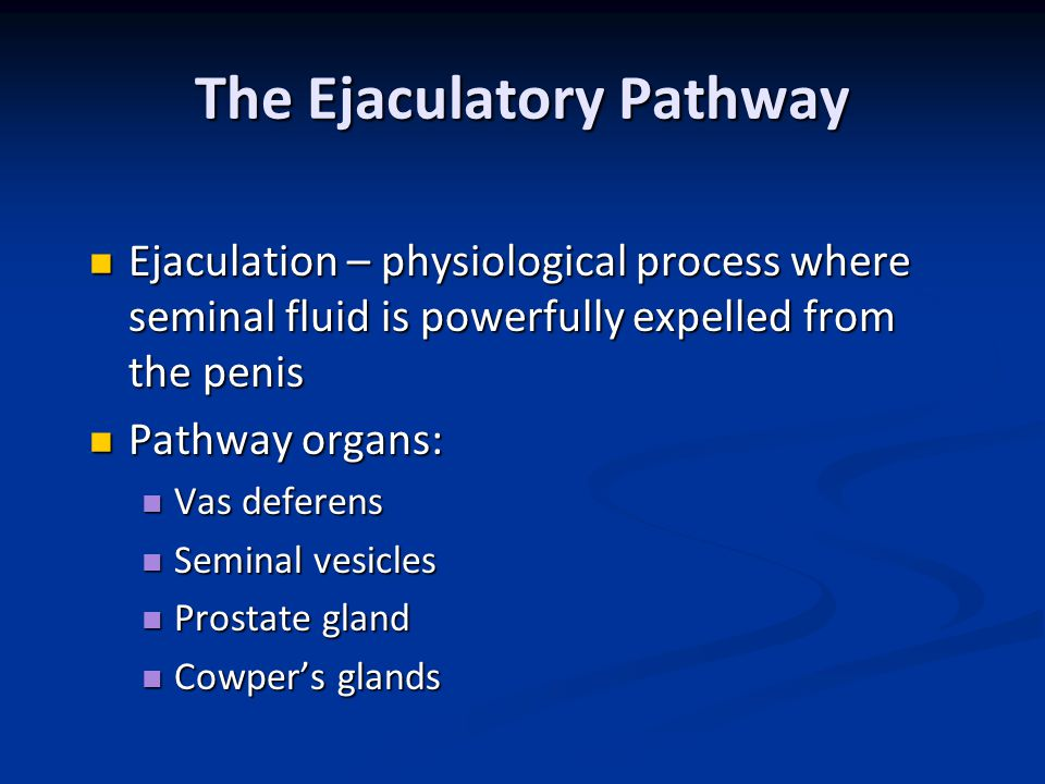 The Ejaculatory Pathway