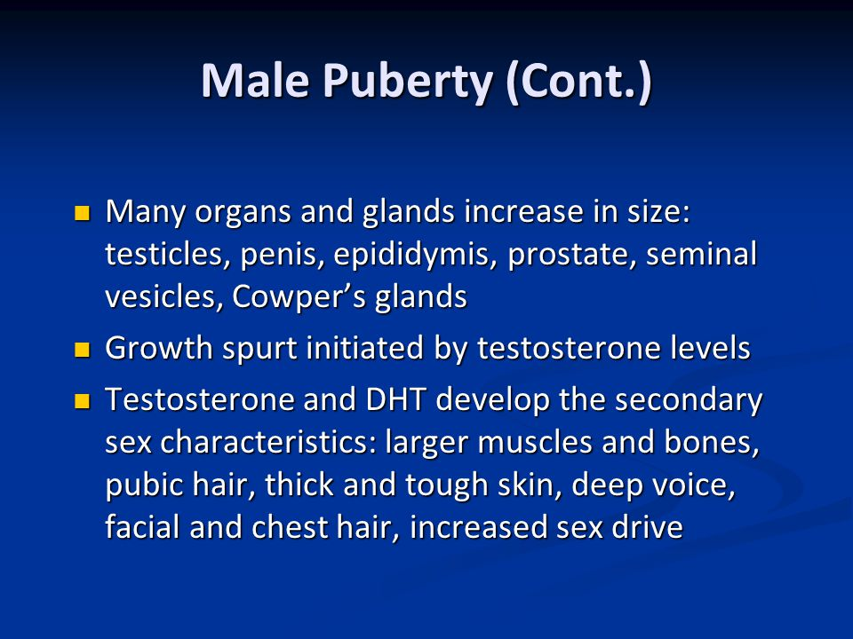 Male Puberty (Cont.) Many organs and glands increase in size: testicles, penis, epididymis, prostate, seminal vesicles, Cowper's glands.