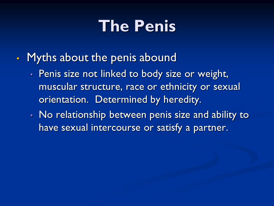 The Penis Myths about the penis abound