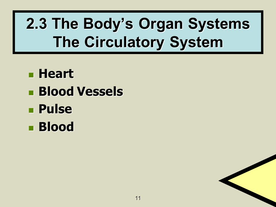 2.3 The Body's Organ Systems The Circulatory System