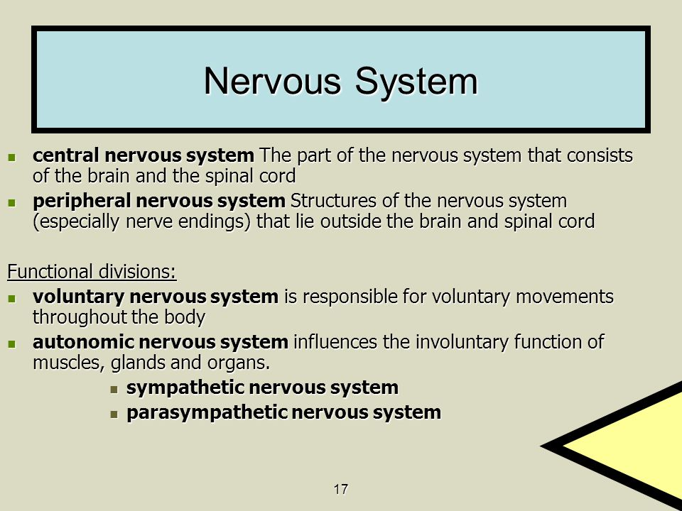 Nervous System central nervous system The part of the nervous system that consists of the brain and the spinal cord.