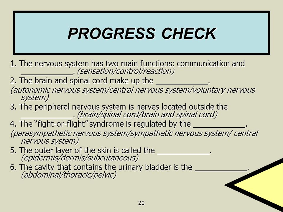 PROGRESS CHECK 1. The nervous system has two main functions: communication and ____________. (sensation/control/reaction)