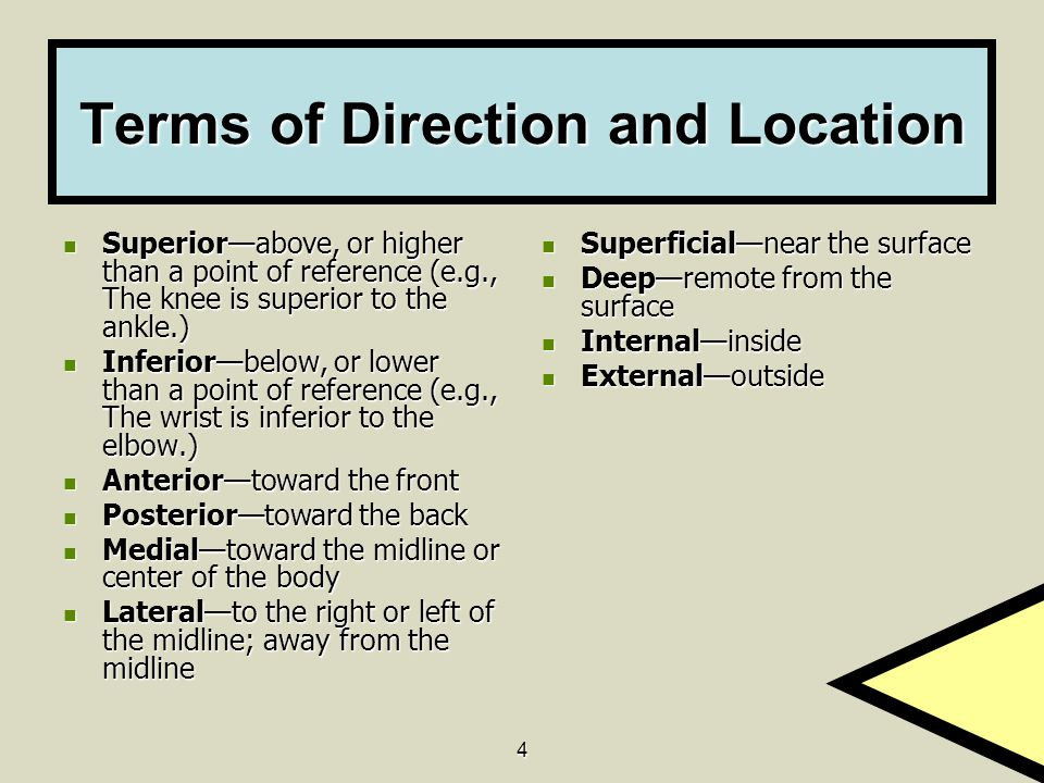 Terms of Direction and Location