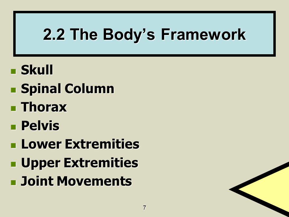2.2 The Body's Framework Skull Spinal Column Thorax Pelvis