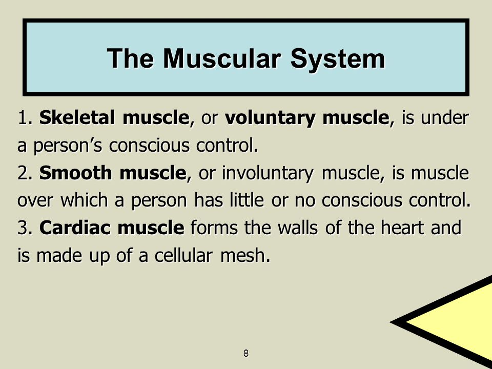 The Muscular System 1. Skeletal muscle, or voluntary muscle, is under