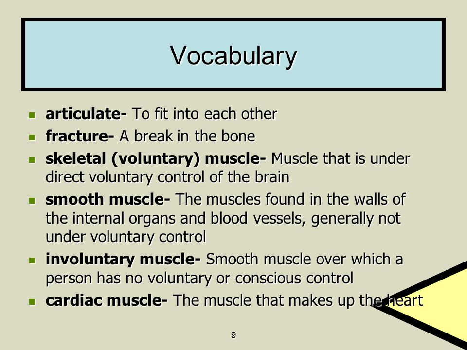 Vocabulary articulate- To fit into each other