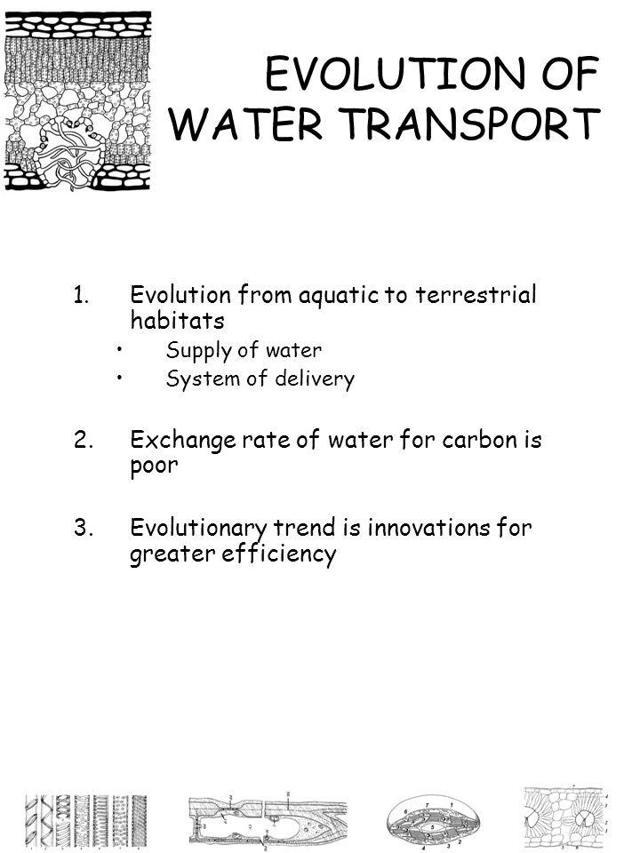EVOLUTION OF WATER TRANSPORT