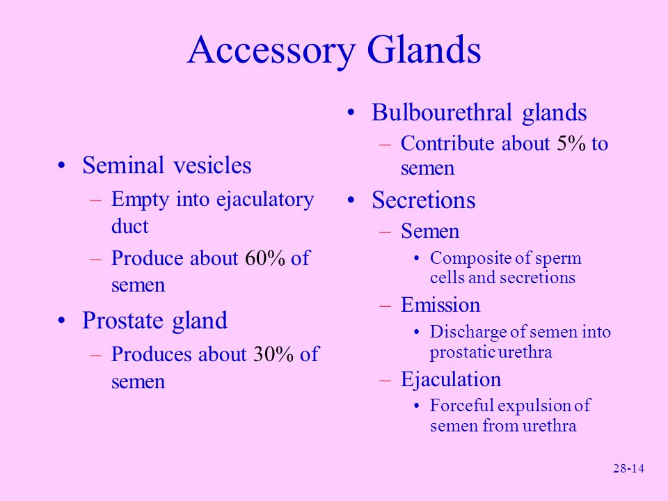 Accessory Glands Bulbourethral glands Secretions Seminal vesicles