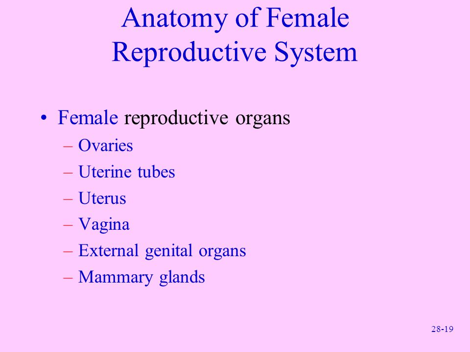 Anatomy of Female Reproductive System