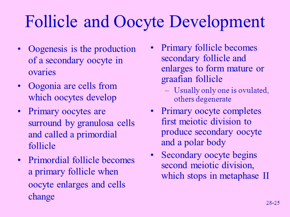 Follicle and Oocyte Development