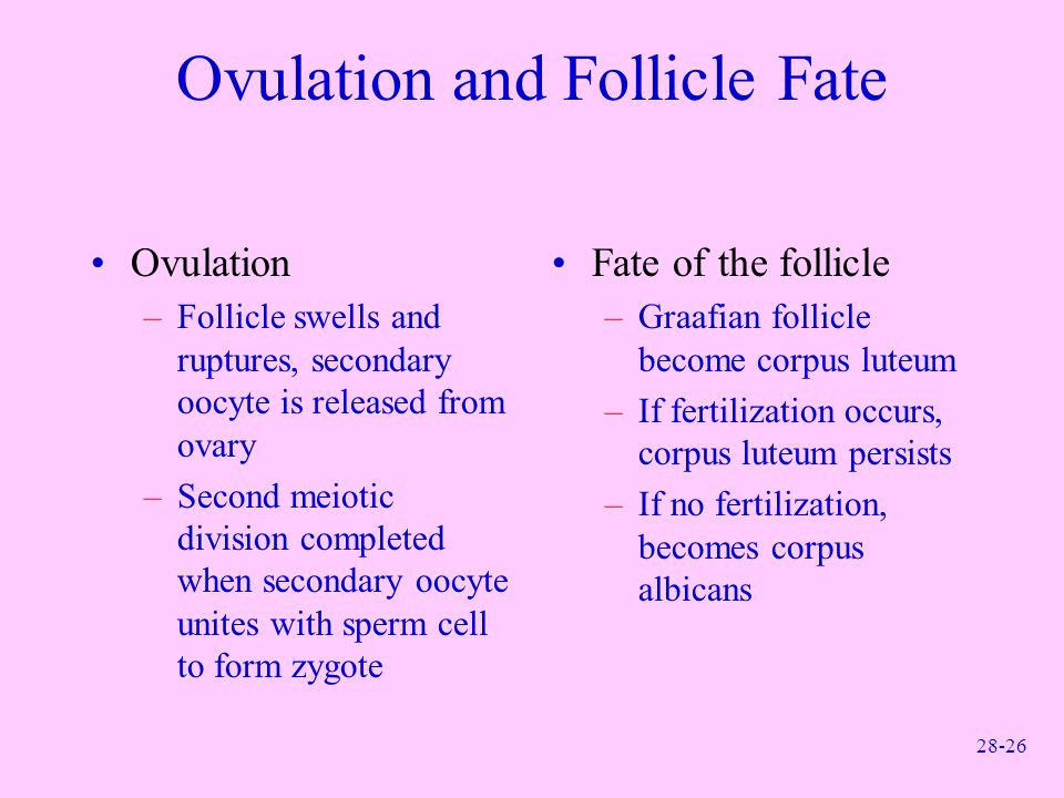 Ovulation and Follicle Fate