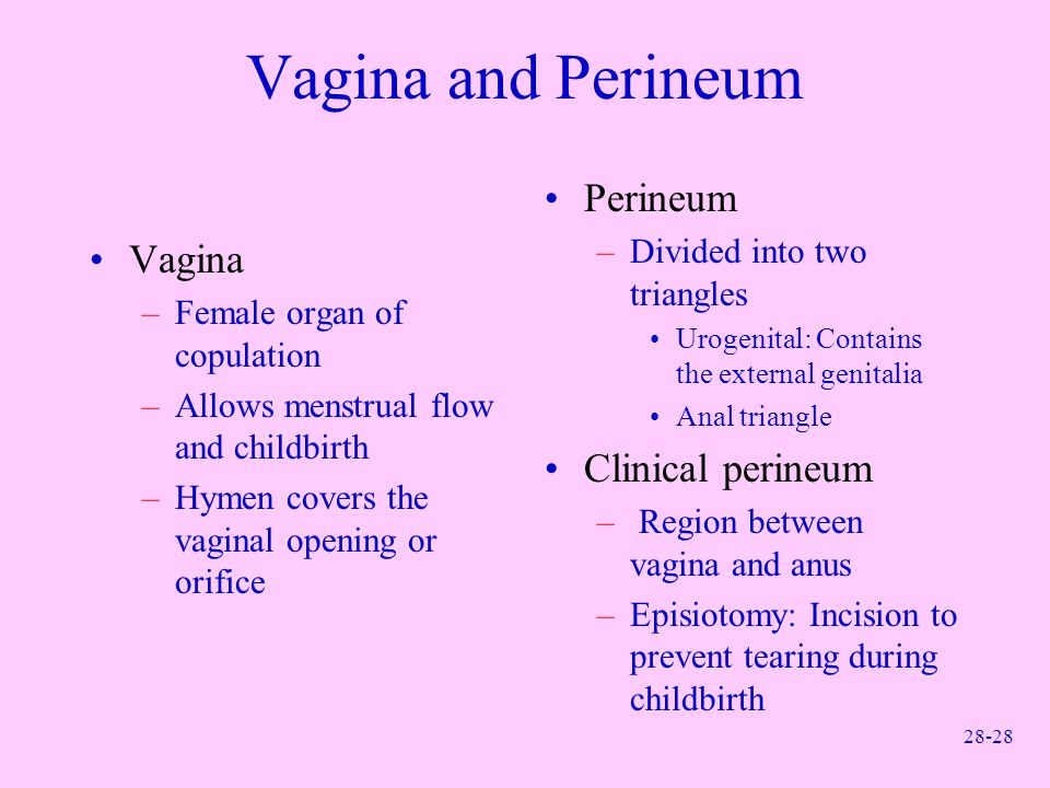 Vagina and Perineum Perineum Vagina Clinical perineum