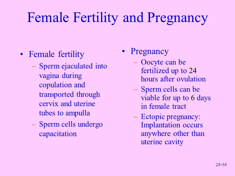 Female Fertility and Pregnancy
