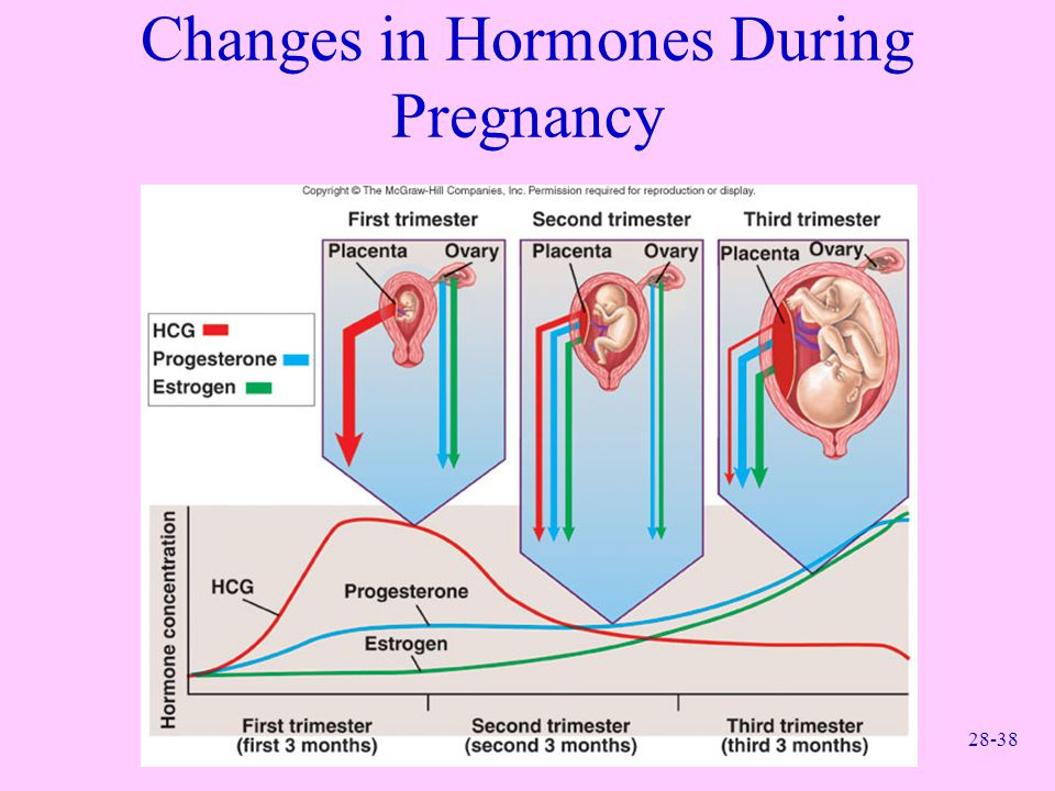 Changes in Hormones During Pregnancy