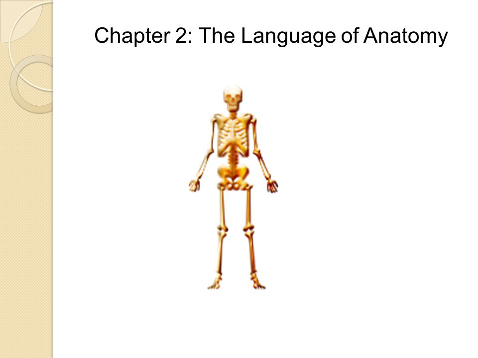 Chapter 2 The Language Of Anatomy Ppt Download