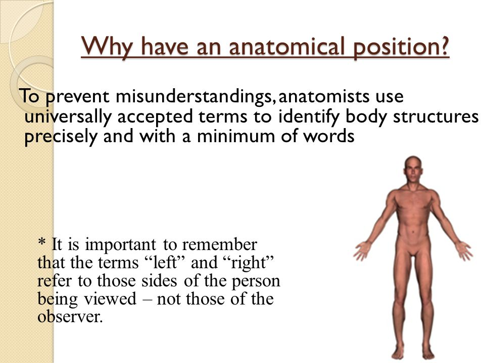 Why have an anatomical position