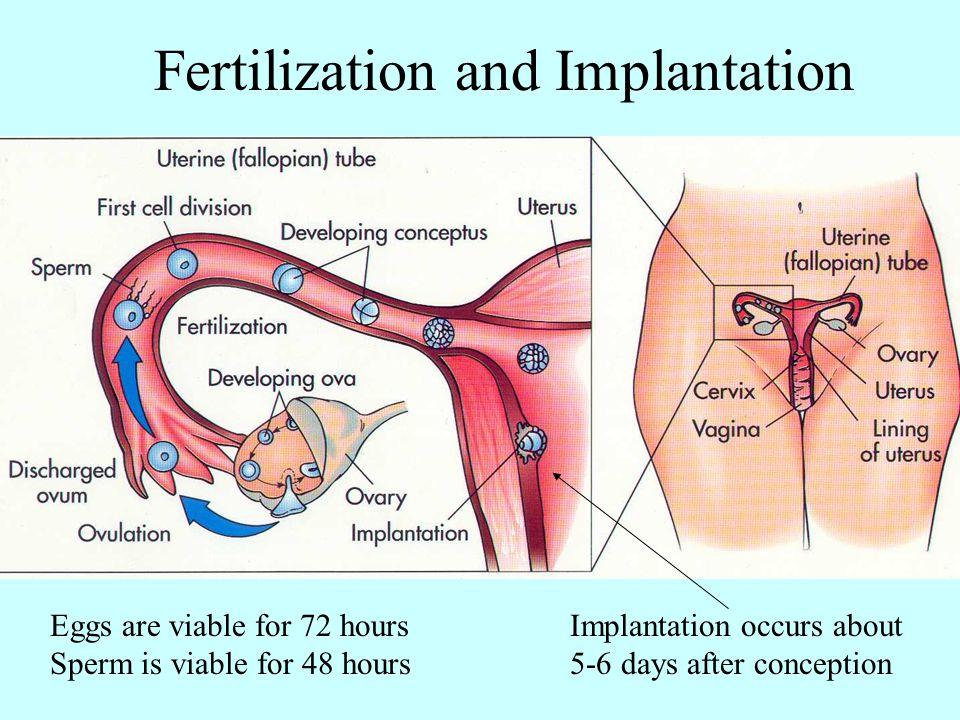 Fertilization and Implantation