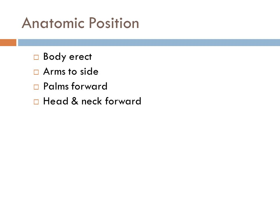 Anatomic Position Body erect Arms to side Palms forward