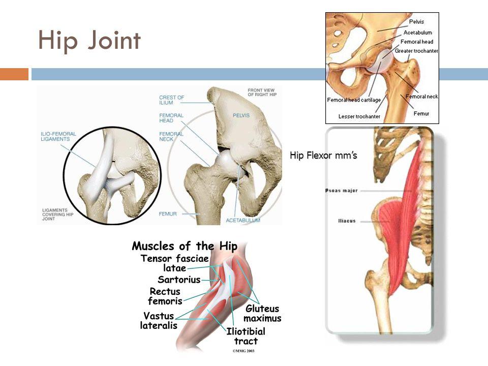 Hip Joint Hip Flexor mm's
