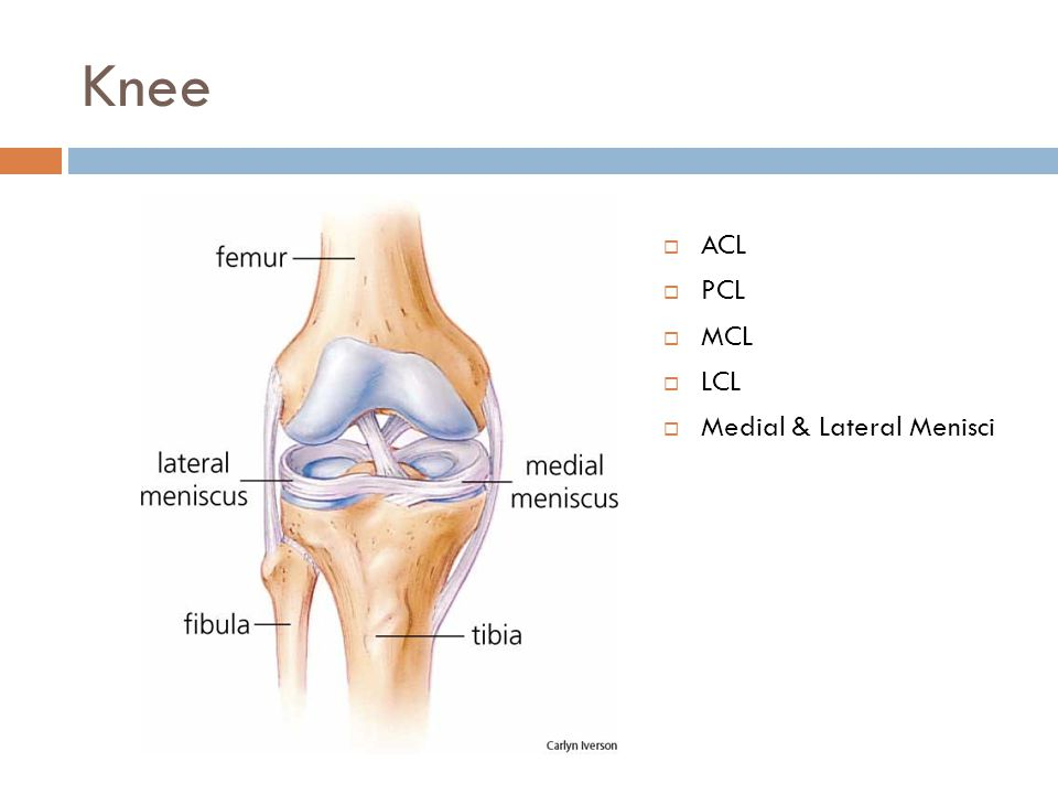 Knee ACL PCL MCL LCL Medial & Lateral Menisci