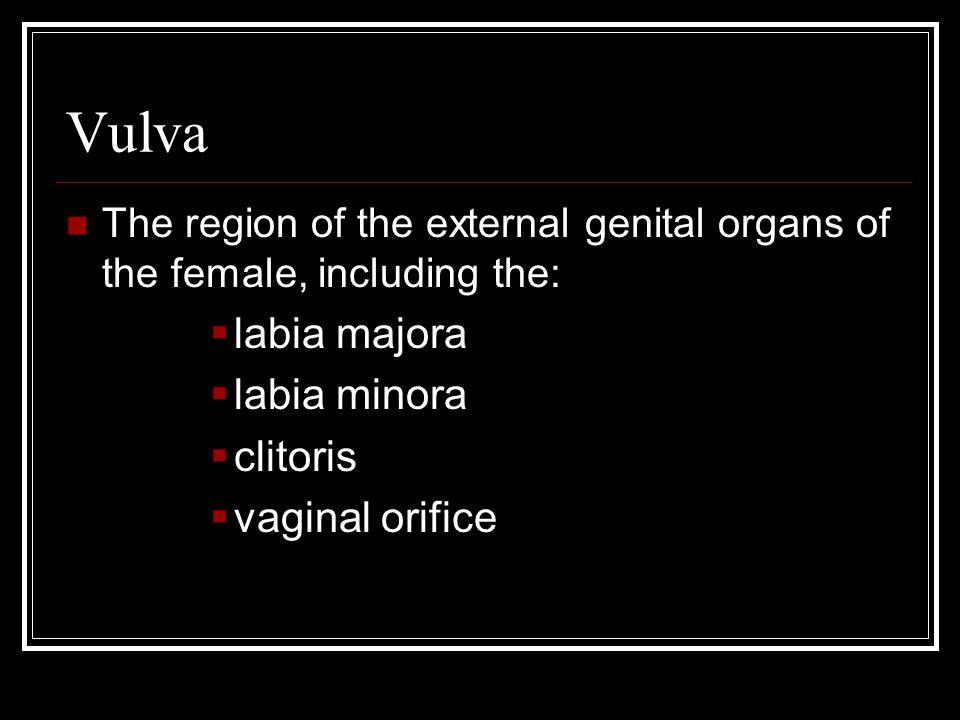 Vulva labia majora labia minora clitoris vaginal orifice