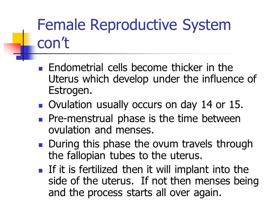 Female Reproductive System con't
