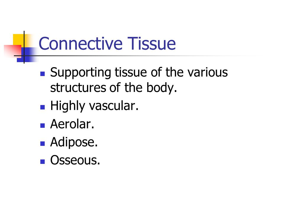 Connective Tissue Supporting tissue of the various structures of the body. Highly vascular. Aerolar.