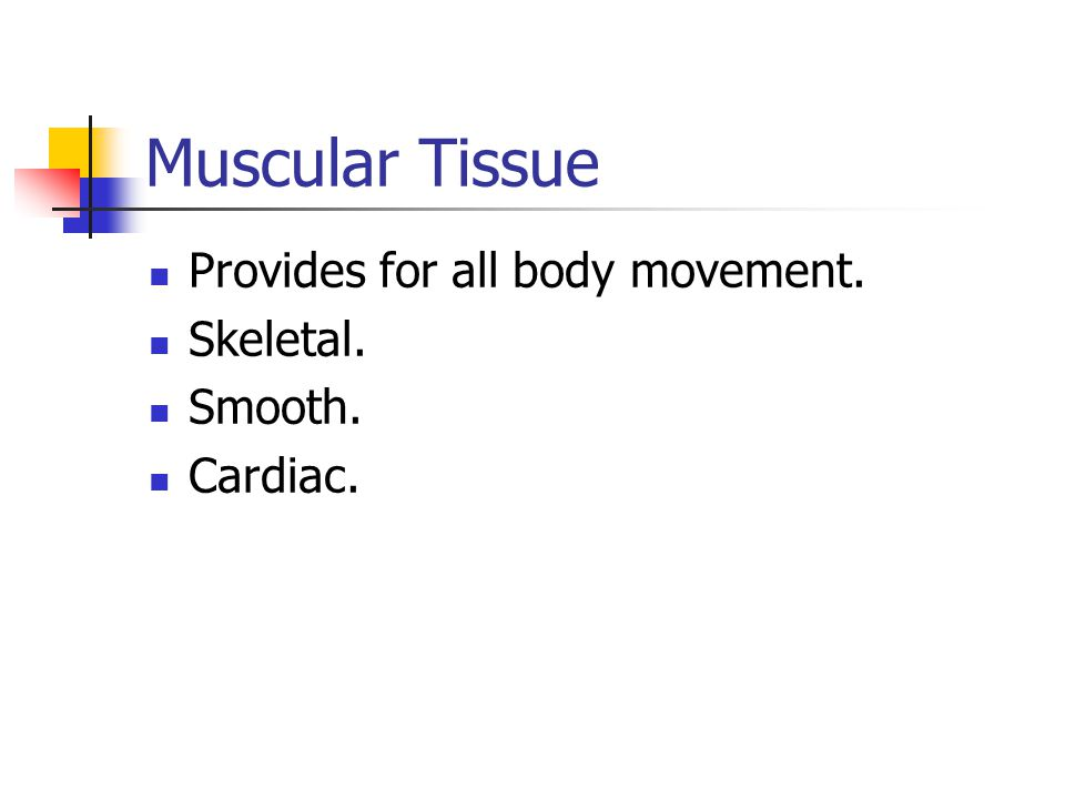 Muscular Tissue Provides for all body movement. Skeletal. Smooth.