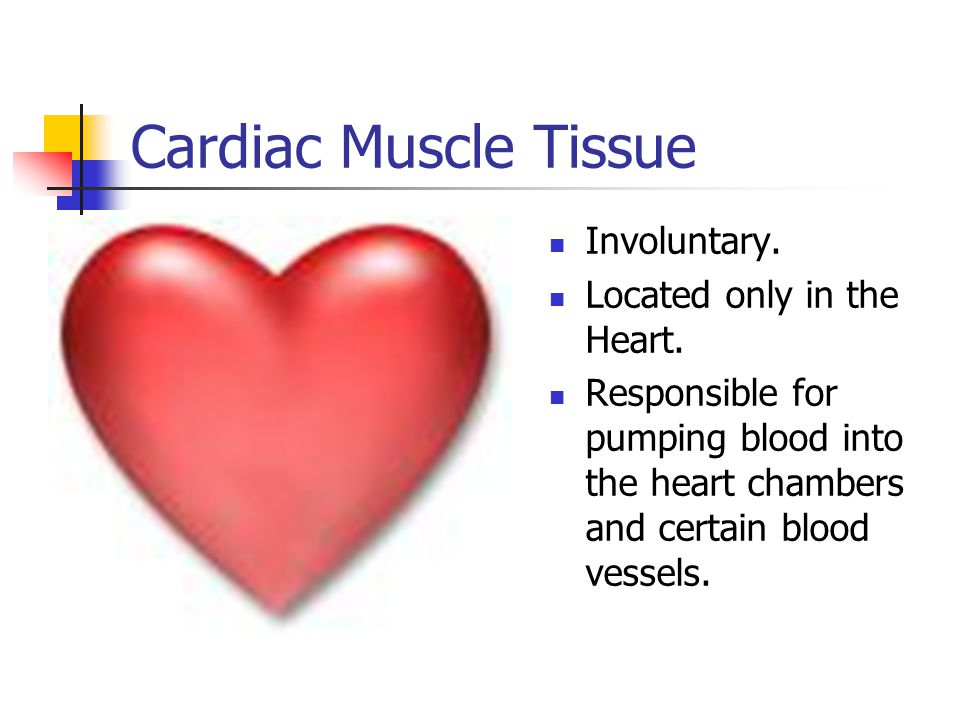 Cardiac Muscle Tissue Involuntary. Located only in the Heart.