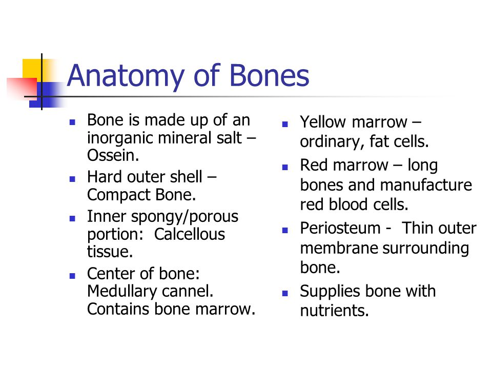 Anatomy of Bones Bone is made up of an inorganic mineral salt – Ossein. Hard outer shell – Compact Bone.