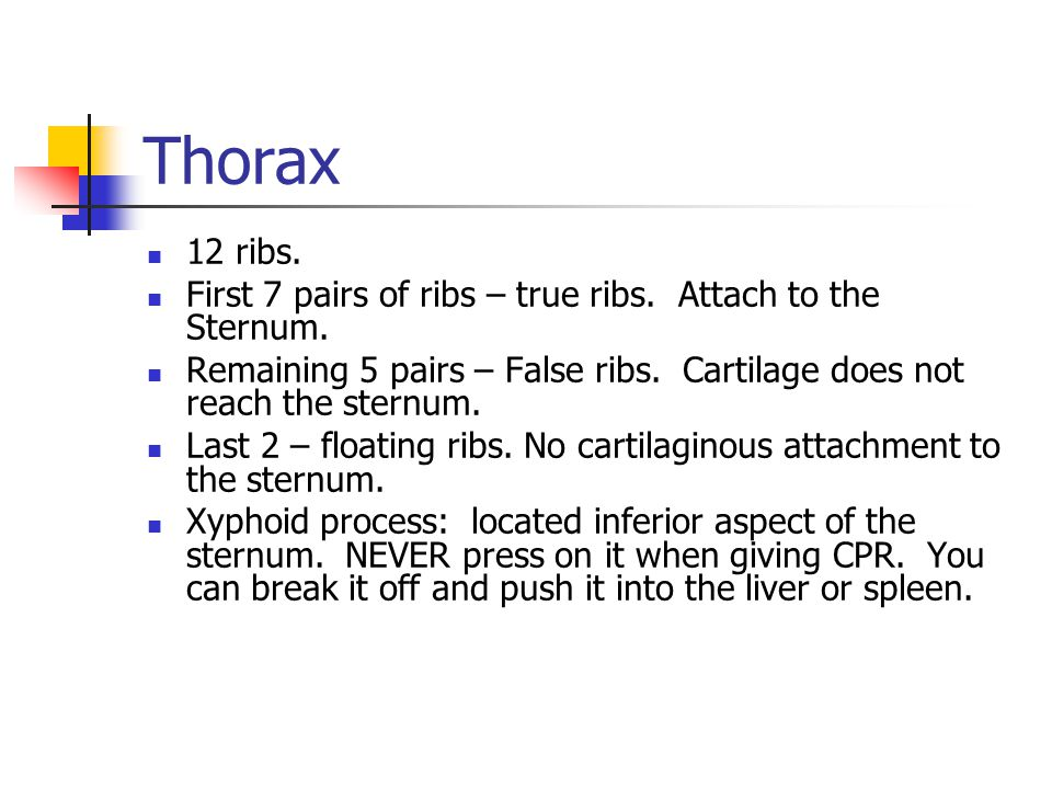 Thorax 12 ribs. First 7 pairs of ribs – true ribs. Attach to the Sternum. Remaining 5 pairs – False ribs. Cartilage does not reach the sternum.